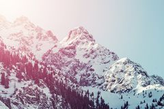 Δάσος έλατου τοπίων χειμερινών βουνών ανατολής Στοκ φωτογραφία με δικαίωμα ελεύθερης χρήσης