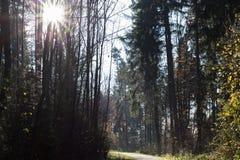 δάσος έλατου φθινοπώρου Νοεμβρίου Στοκ Εικόνα