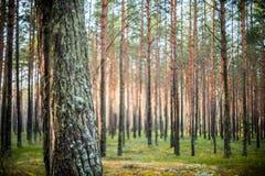 Δάσος δέντρων και θαμπάδων στοκ εικόνα με δικαίωμα ελεύθερης χρήσης