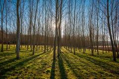 Δάσος δέντρων με τις μακριές σκιές Στοκ φωτογραφία με δικαίωμα ελεύθερης χρήσης