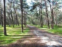 Δάσος δέντρων πεύκων, Λιθουανία Στοκ φωτογραφίες με δικαίωμα ελεύθερης χρήσης