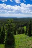 Δάσος δέντρων πεύκων Στοκ εικόνες με δικαίωμα ελεύθερης χρήσης