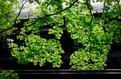 Δάσος δέντρων στο δάσος σε Aomori, Ιαπωνία Στοκ φωτογραφίες με δικαίωμα ελεύθερης χρήσης