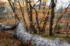 Δάσος Αγίου Ana Στοκ Φωτογραφίες