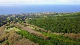 Δάσος - Αζόρες, Πορτογαλία απόθεμα βίντεο