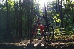 Δάσος αθλητικών ποδηλάτων την άνοιξη στις ακτίνες του φωτός του ήλιου στοκ εικόνα