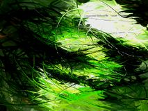 δάσος ακανθώδες Στοκ εικόνα με δικαίωμα ελεύθερης χρήσης
