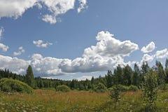 δάσος ακρών Στοκ Εικόνα