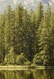 δάσος ακρών Στοκ Φωτογραφία