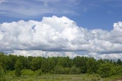 δάσος ακρών Στοκ φωτογραφίες με δικαίωμα ελεύθερης χρήσης