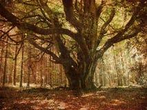 δάσος αναδρομικό Στοκ Εικόνες