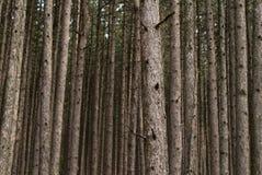 δάσος ανασκόπησης Στοκ Εικόνες