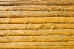 δάσος ανασκόπησης Στοκ φωτογραφίες με δικαίωμα ελεύθερης χρήσης