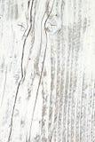 δάσος ανασκόπησης Στοκ Εικόνα