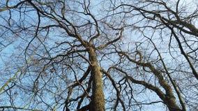 Δάσος φιλμ μικρού μήκους