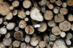 δάσος αποκοπών Στοκ Φωτογραφία