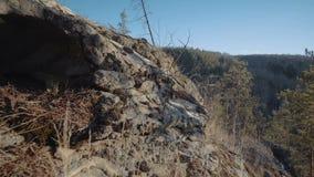 Δάσος από ένα ύψος βουνών απόθεμα βίντεο