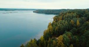 Δάσος από τη λίμνη και κωνοφόρα δέντρα στο Βορρά Εναέρια οριζόντια άποψη κηφήνων Τοπίο με τα πεύκα, ηλιόλουστη ημέρα μέσα φιλμ μικρού μήκους