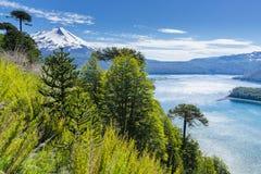 Δάσος αροκαριών στο εθνικό πάρκο Conguillio, Χιλή στοκ εικόνες με δικαίωμα ελεύθερης χρήσης