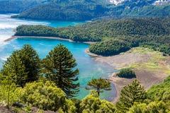 Δάσος αροκαριών στο εθνικό πάρκο Conguillio, Χιλή στοκ φωτογραφία