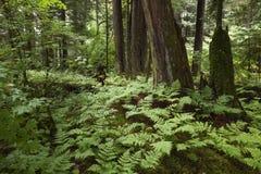 δάσος αρχέγονο Στοκ φωτογραφίες με δικαίωμα ελεύθερης χρήσης