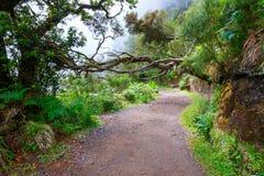 Δάσος δαφνών, νησί της Μαδέρας, Πορτογαλία στοκ φωτογραφία