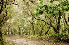 Δάσος δαφνών Στοκ Εικόνες
