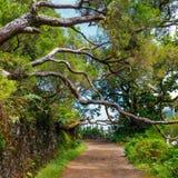 Δάσος δαφνών στοκ φωτογραφία με δικαίωμα ελεύθερης χρήσης