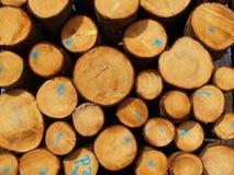 δάσος βιομηχανίας Στοκ φωτογραφία με δικαίωμα ελεύθερης χρήσης