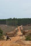 δάσος βιομηχανίας στοκ εικόνα με δικαίωμα ελεύθερης χρήσης