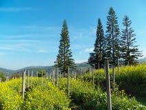 Δάσος βουνών δέντρων πεύκων Στοκ φωτογραφία με δικαίωμα ελεύθερης χρήσης