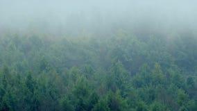 Δάσος βουνών της Misty στον αέρα απόθεμα βίντεο