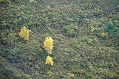 Δάσος βουνών φθινοπώρου Στοκ Εικόνες