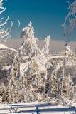 Δάσος βουνών χιονιού Στοκ φωτογραφίες με δικαίωμα ελεύθερης χρήσης