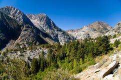 Δάσος βουνών Στοκ εικόνα με δικαίωμα ελεύθερης χρήσης