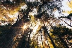 Δάσος βουνών Ine σε θερινή περίοδο Στοκ Εικόνα