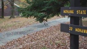 Δάσος βουνών Mohawk (1 9) απόθεμα βίντεο