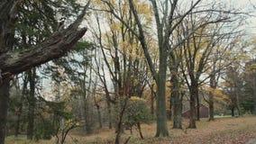 Δάσος βουνών Mohawk (2 9) απόθεμα βίντεο
