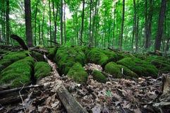 Δάσος - βρύο 1 Sphagnum Στοκ εικόνα με δικαίωμα ελεύθερης χρήσης