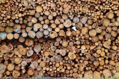 Δάσος για την καύση Στοκ φωτογραφία με δικαίωμα ελεύθερης χρήσης