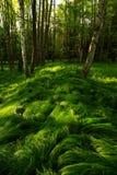 δάσος γωνιών Στοκ Φωτογραφίες