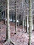 δάσος δέντρων έλατου στοκ φωτογραφίες με δικαίωμα ελεύθερης χρήσης