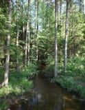 Δάσος δέντρων πεύκων και έλατου με τη λίμνη και τον ποταμό στοκ εικόνα