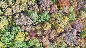 Δάσος δέντρων φυλλώματος το φθινόπωρο απόθεμα βίντεο