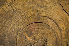 δάσος δαχτυλιδιών Στοκ Εικόνες