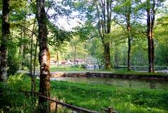δάσος διαβίωσης Στοκ φωτογραφίες με δικαίωμα ελεύθερης χρήσης