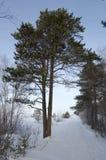 δάσος διαδρομής Στοκ Εικόνες