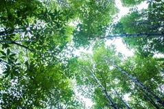 Δάσος εγκαταστάσεων Taboon Στοκ εικόνα με δικαίωμα ελεύθερης χρήσης