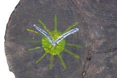 δάσος εικόνων Στοκ εικόνα με δικαίωμα ελεύθερης χρήσης