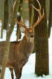 δάσος ελαφιών Στοκ εικόνες με δικαίωμα ελεύθερης χρήσης